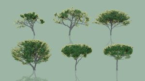 pack 30 tree willow 3D model