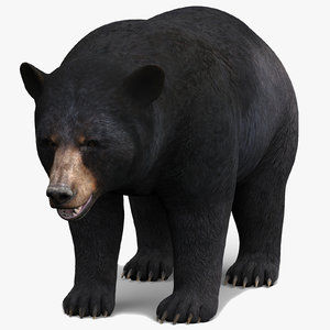 black bear model