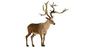 deer animal wildlife 3D model