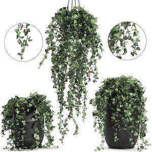 3D interior houseplants hedera