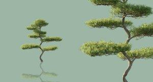 japanese outdoor bonsai tree model