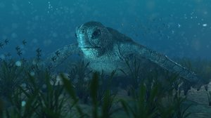 green sea turtle rigged 3D