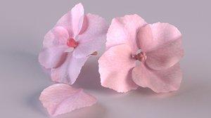 hydrangea flower bloom blossom 3D model