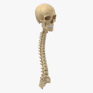 3D real human spine bones