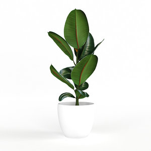 3D model indoor ficus plant