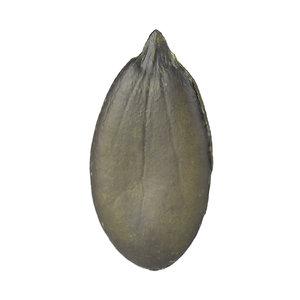 scanned pumpkin seed model
