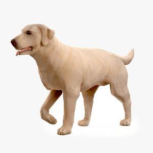 dog labrador 3D model