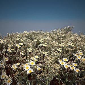 chamomile plant 3D