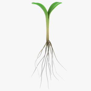 realistic sprout roots 3D model