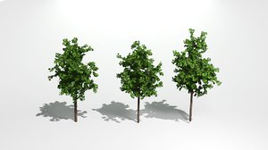 3D small tree model