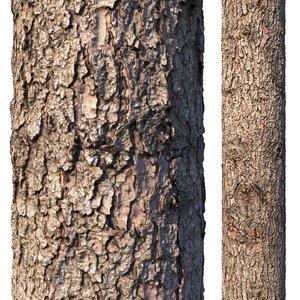 spruce bark 3D model