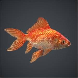 3D model goldfish pbr ready context