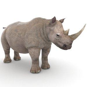 ma rhino rhinoceros