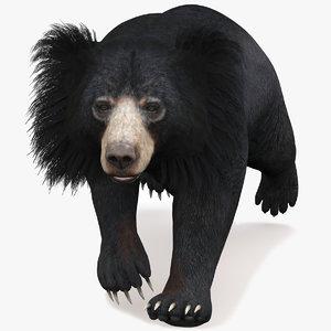 sloth bear animal 3D
