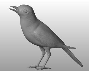 printable wagtail bird 3D