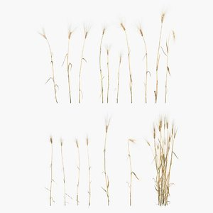 barley grain food 3D