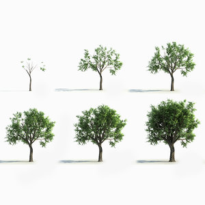 3D model big tree grow