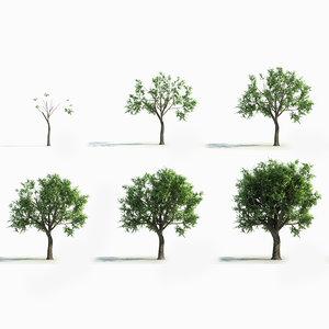 3D model big tree grow
