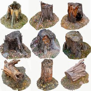 3D scan bpr tree stump model