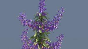 plant flower 3D