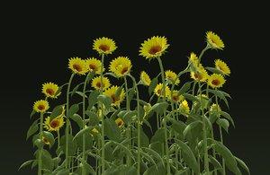 3D sunflower seeds food
