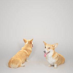 3D 2020 corgi dog animals