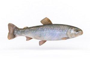 3D fresh char fish