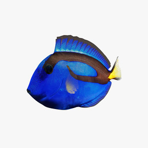 rigging fish blue tang 3D model