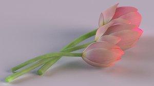 water lily flora plants 3D model