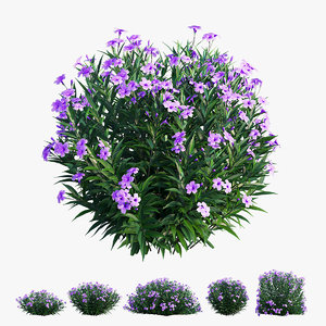 brittoniana plant set ruellia 3D