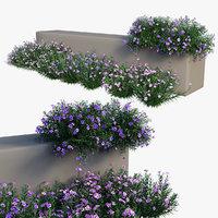 Ruellia brittoniana plant set 04
