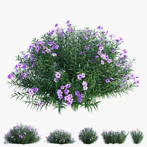 3D brittoniana plant set 03