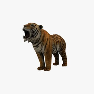 3D tiger animation model