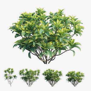 3D croton plant set 01