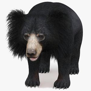 bear animal 3D model