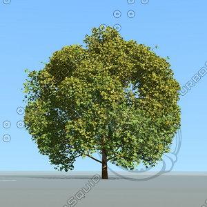 tree wind animation 3D model