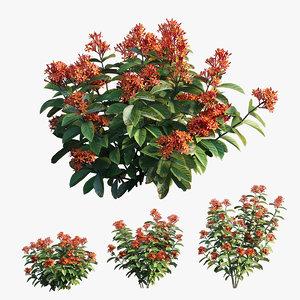 ixora plant set 02 3D