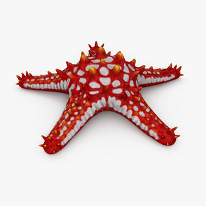 starfish red-knobbed red 3D model