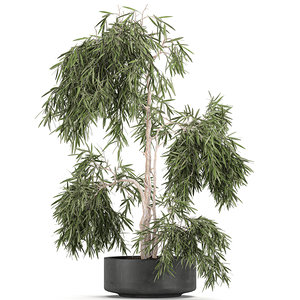 decorative olive tree black 3D model