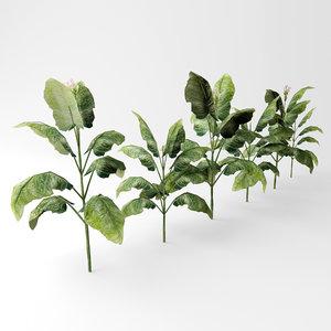 tobako plant 3D model