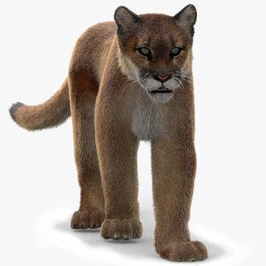 puma fur animation cat 3d model