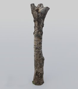 3D photoscanned poplar tree trunk