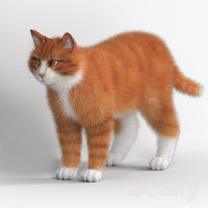 standing cat 3D