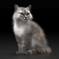 Realistic Cat - 2