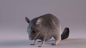 animal rodent mammal 3D model