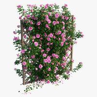 Rose plant set 13