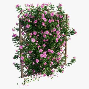 rose plant set 13 3D