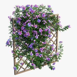 3D model rose plant set 14