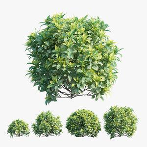plant set 3D