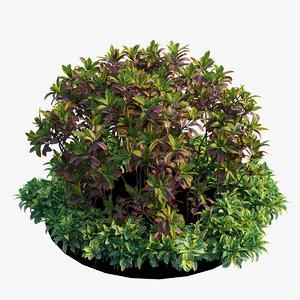 croton plant set 07 3D model